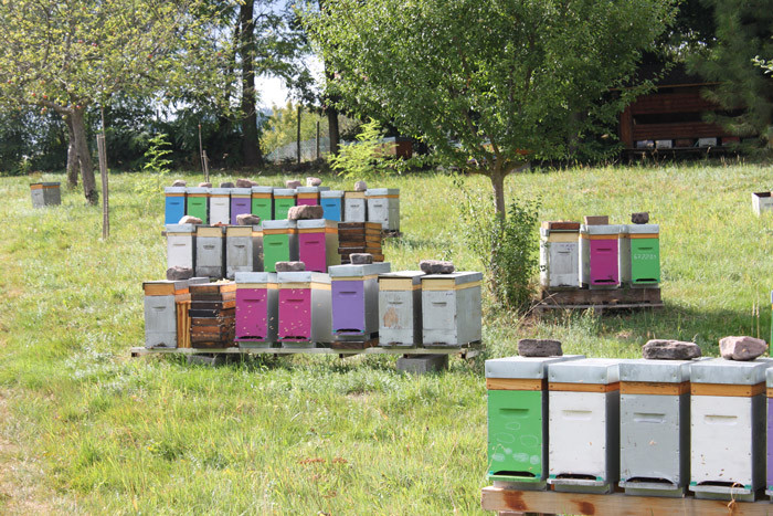 """Opération """"Sauvons les abeilles"""" : Déjà 4 ruches implantées en Alsace !"""